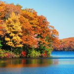 Best Road Trip Destinations for Fall Foliage in Ontario