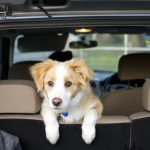 Dog Car Safety: What's the Best Way to Travel with a Dog in the Car?