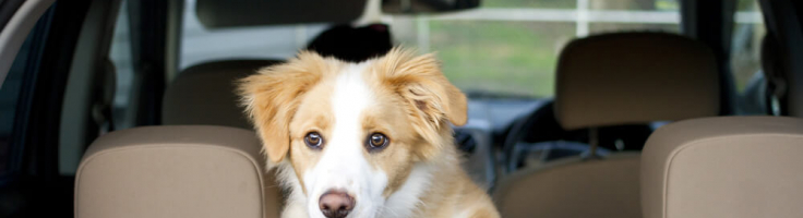 Dog Car Safety: What's the Best Way to Travel with a Dog in